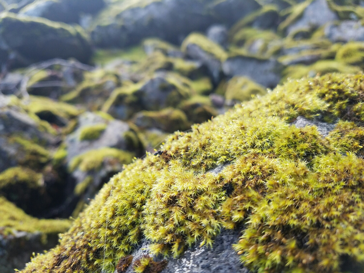 the further north we go, the more moss that appears.
