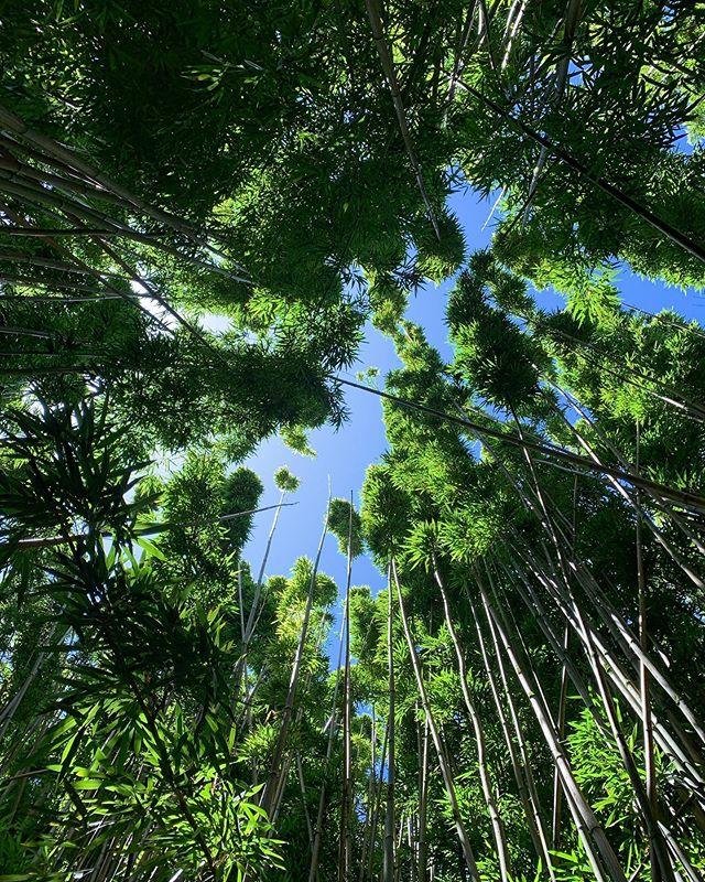 Through the bamboo forest | Pipiwai Trail