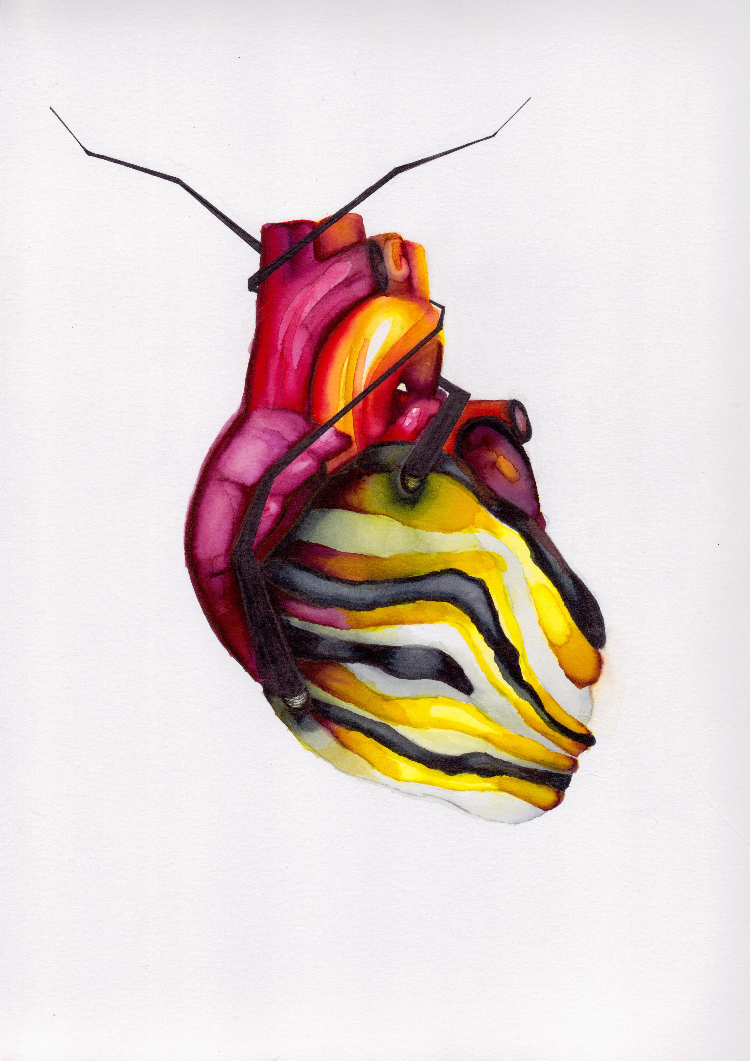Catter Sapien Heart