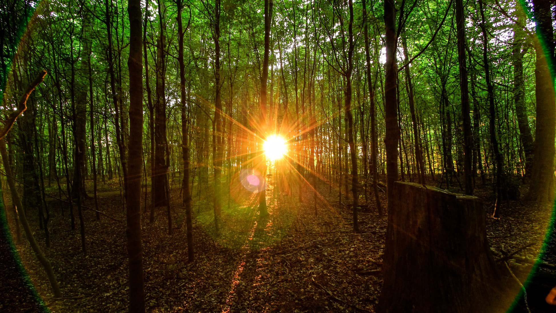 sunset-sunlight.jpg