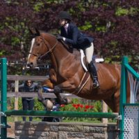 Peter at the Downtown Horse Show in 2014