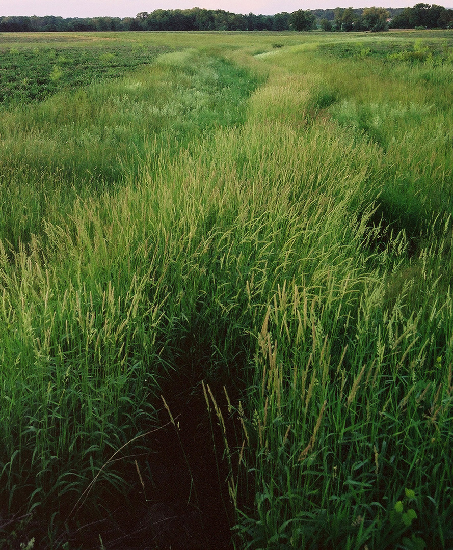Grass field black hole crop.jpg