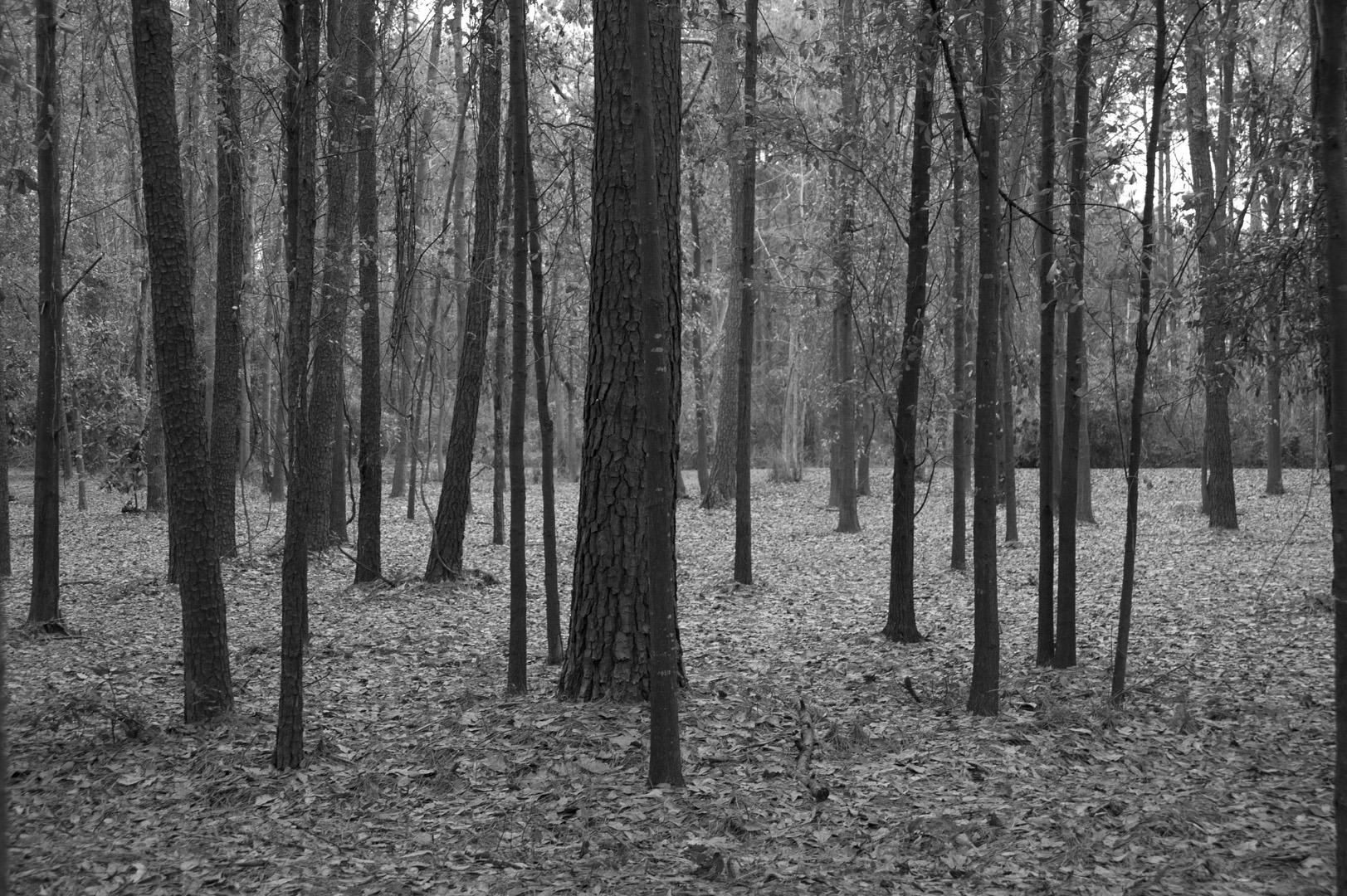 akin forest 001.jpg