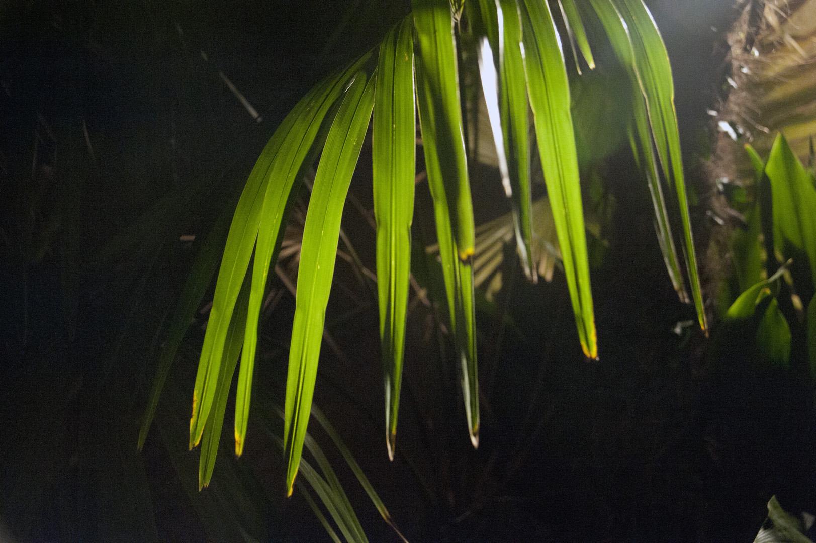 Savannah wet hot plant.jpg