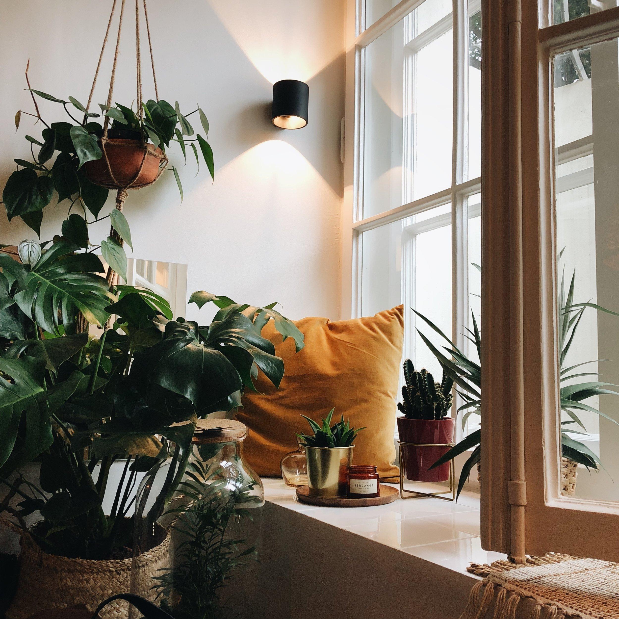 Plantas interiores. Estilismo con vegetación
