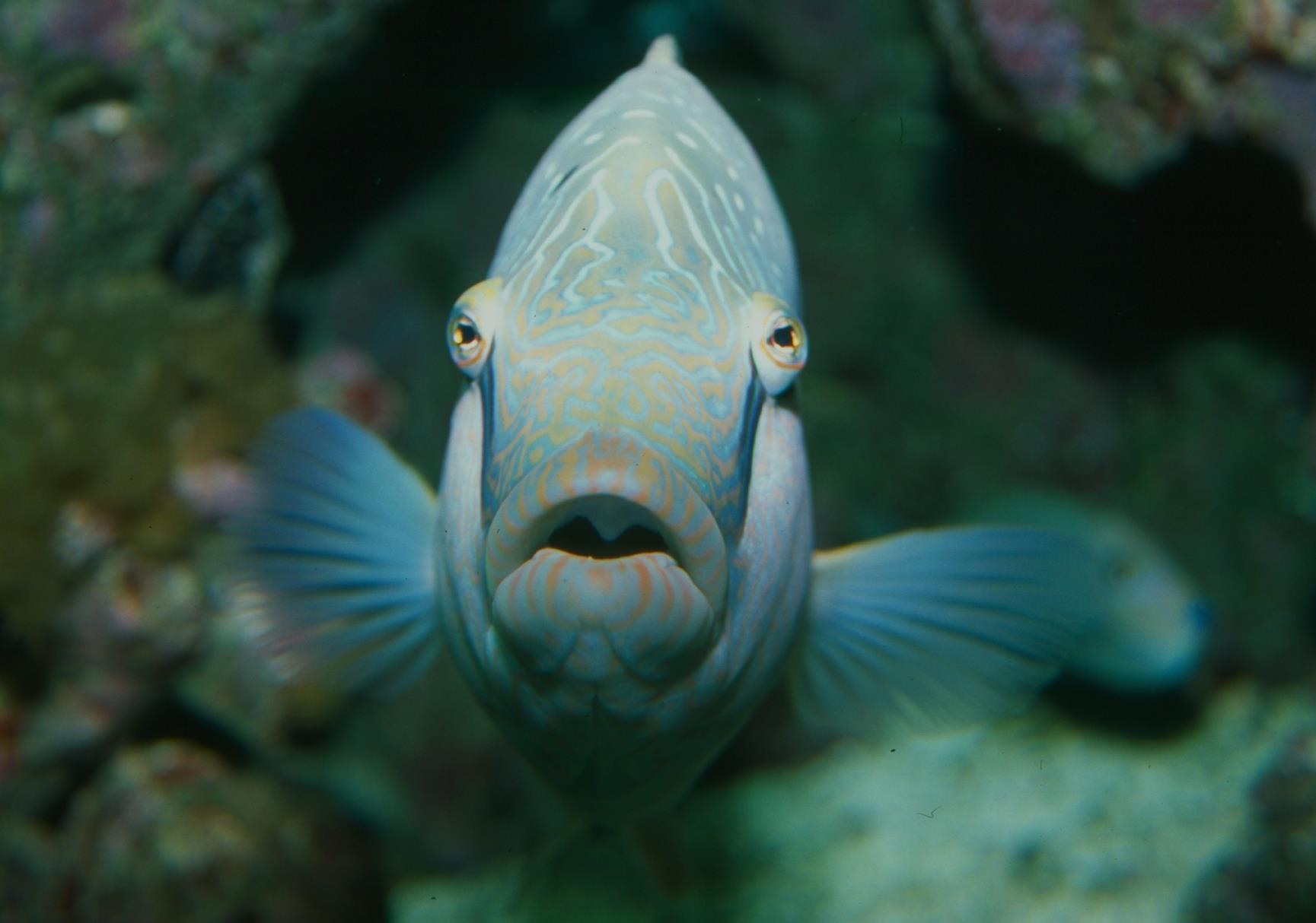 6/Dallas World Aquarium