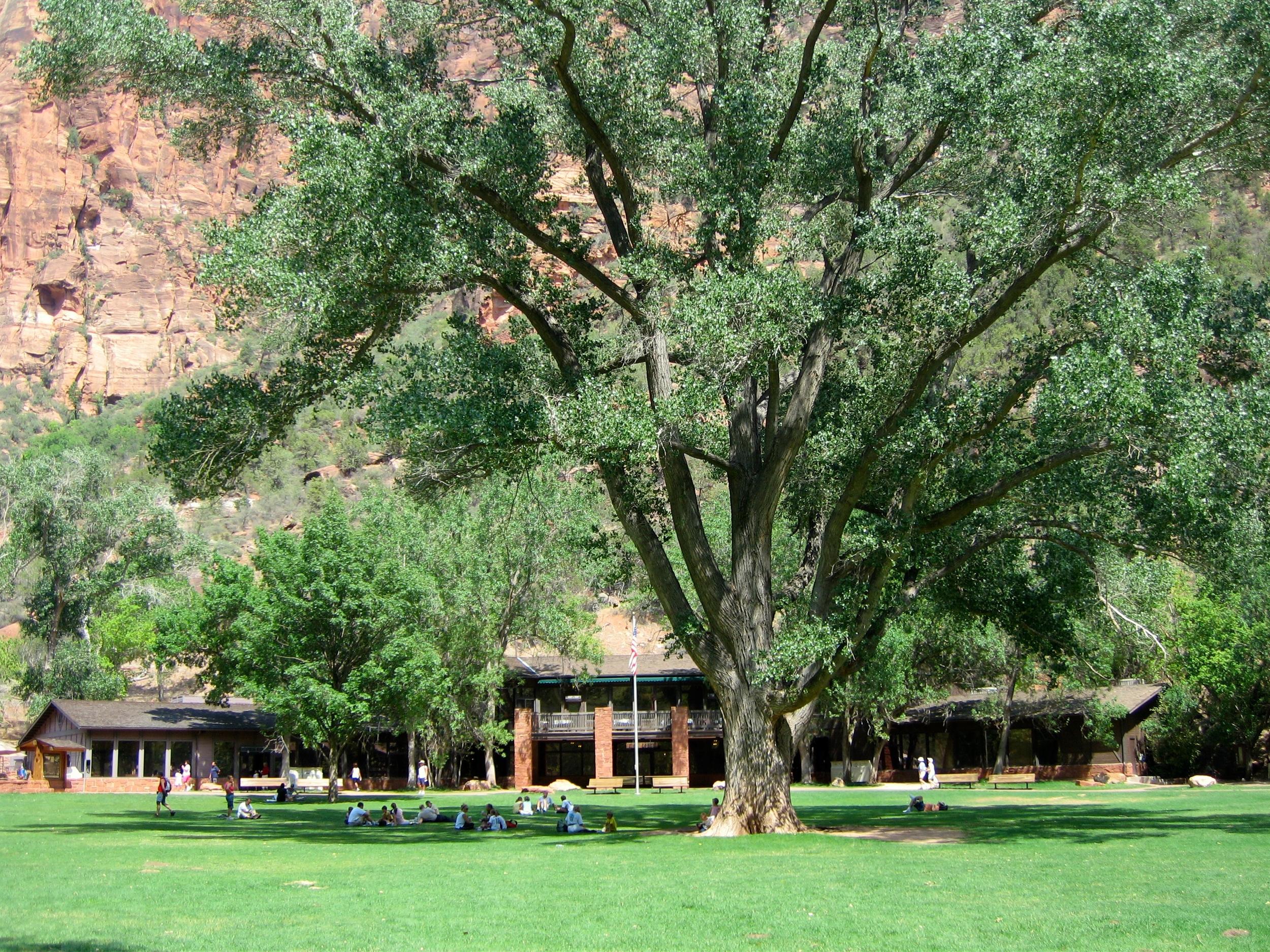 7/Zion Lodge