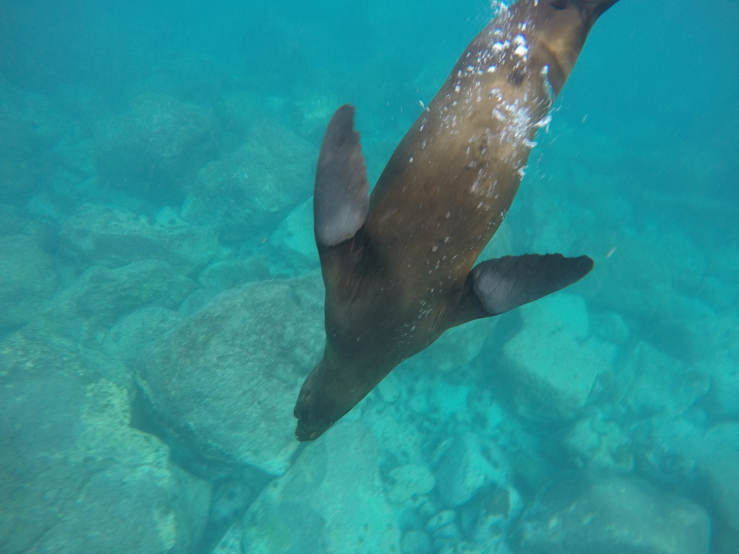 Day 1 (Galapagos Sea Lion).JPG