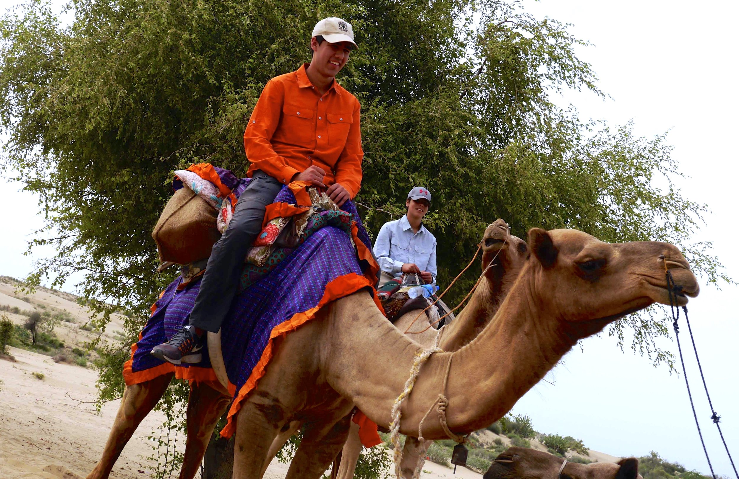 5/Camel rides & desert treks
