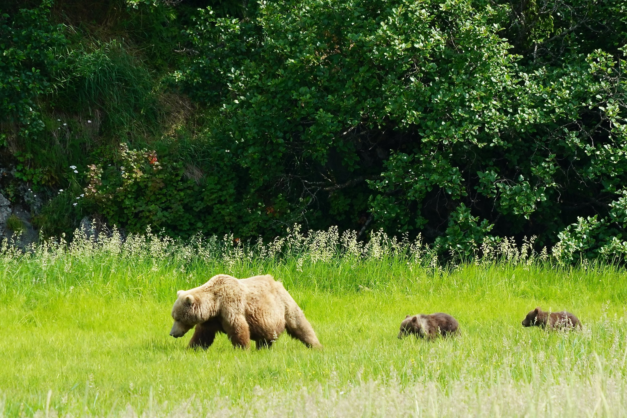 7/See bears in the wild