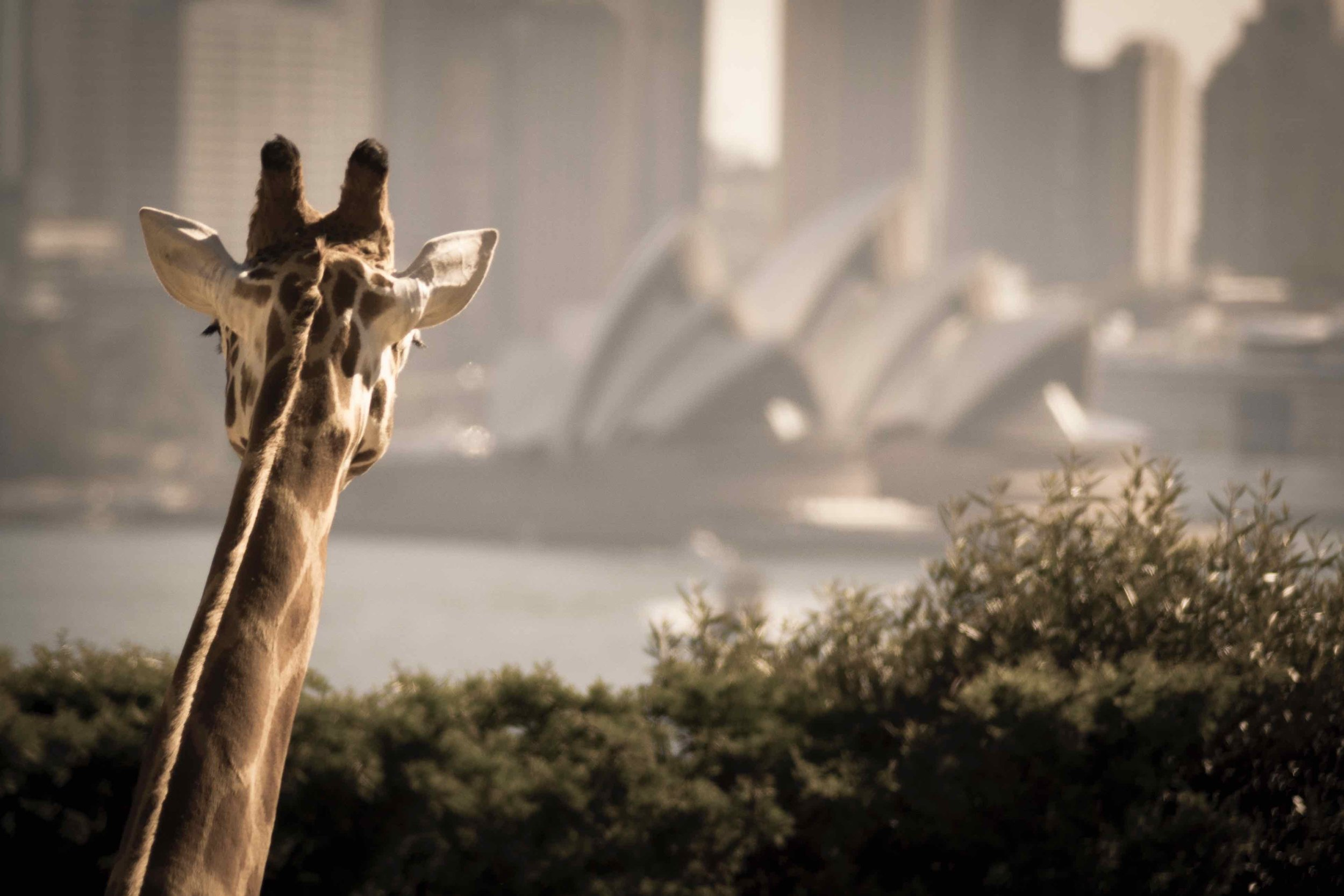 2/Targona Zoo Sydney