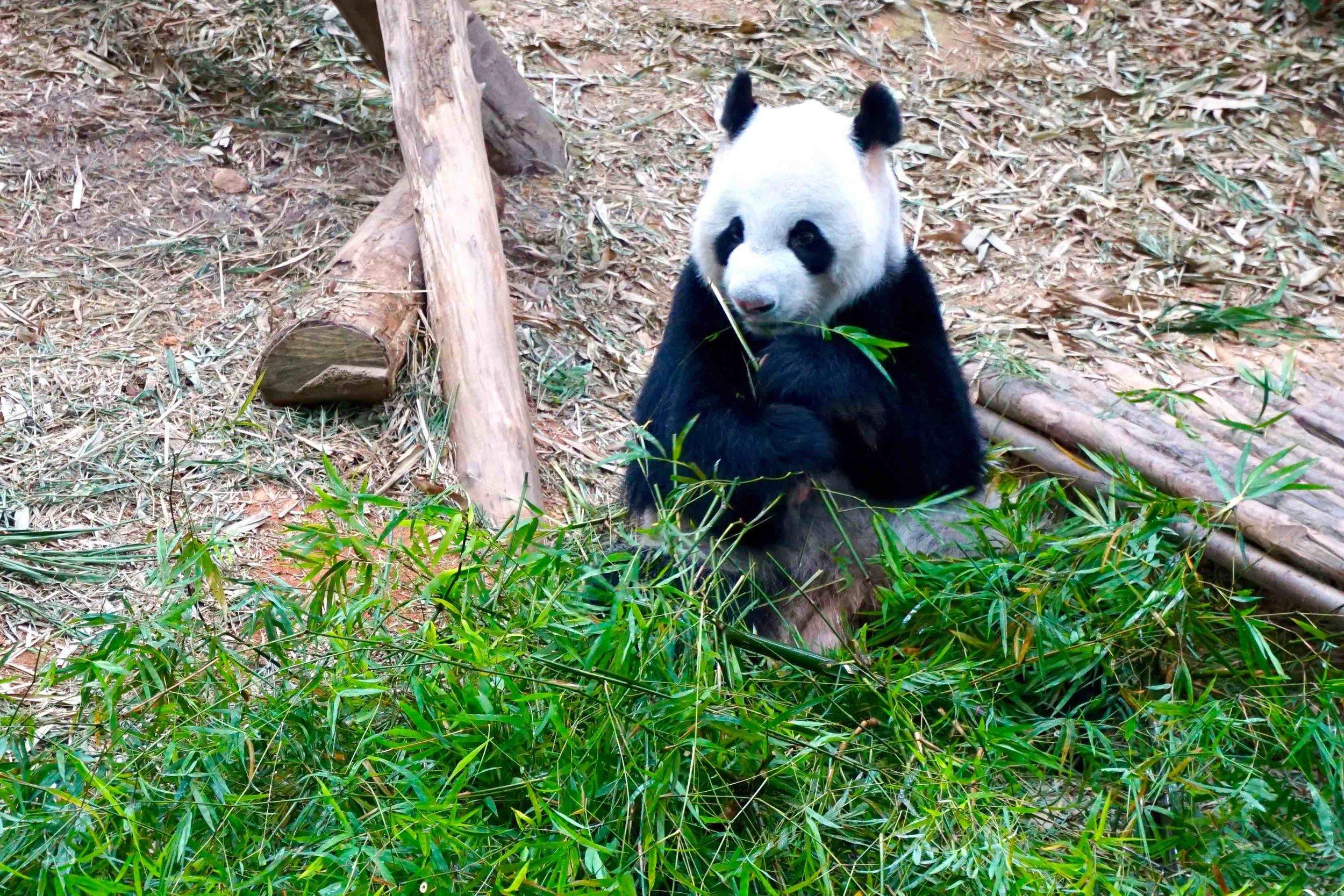 5/Wildlife Reserves Singapore: Singapore Zoo, River Safari, Night Safari, Rainforest Lumina & Jurong Bird Park