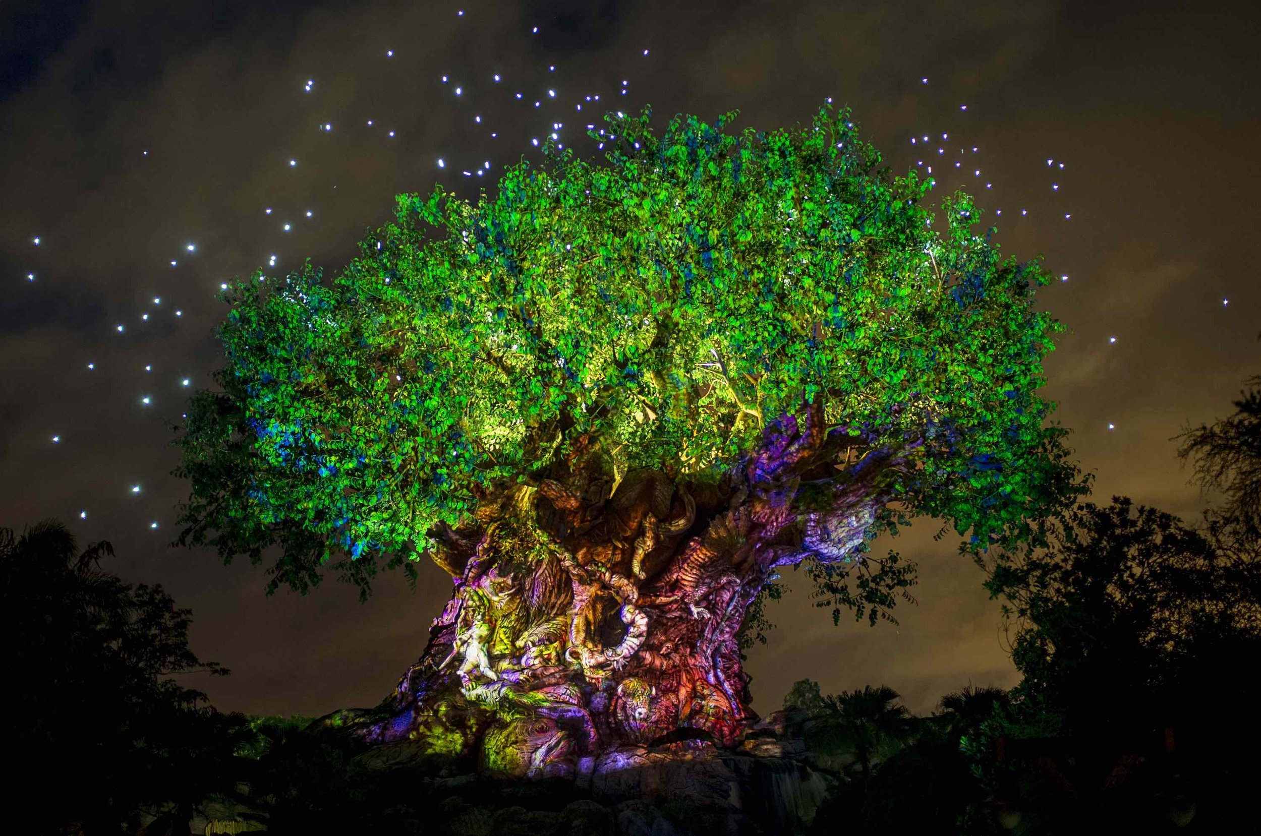 5/Disney's Animal Kingdom