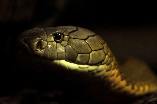 4/Reptile House at ZSL London Zoo