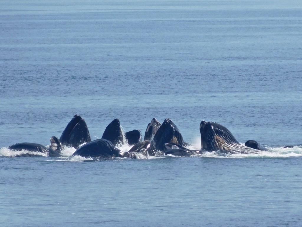 1/Whale watching