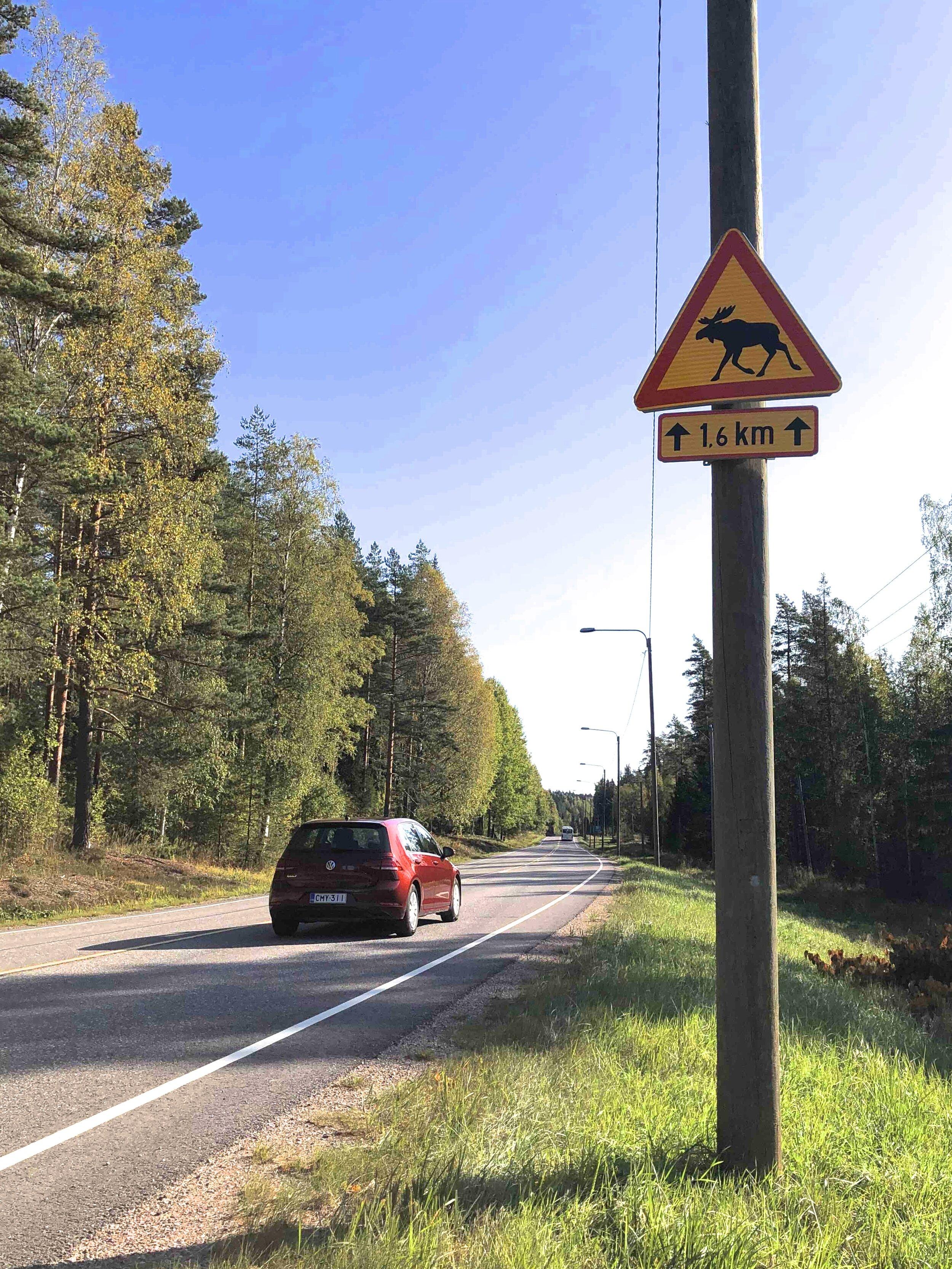 Moose crossing Finland.jpg