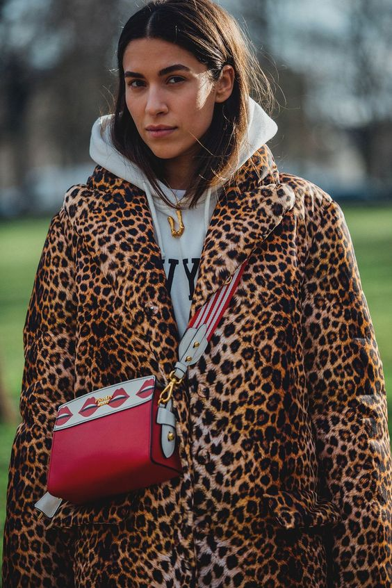 leopard_65.jpg