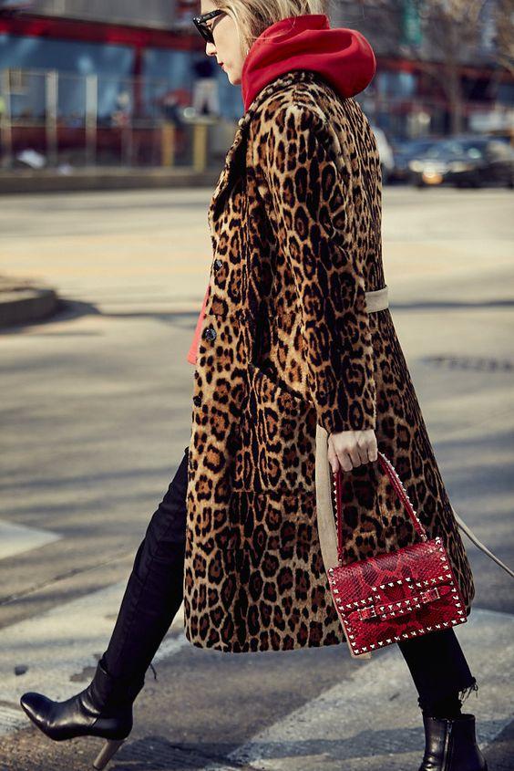 leopard_73.jpg