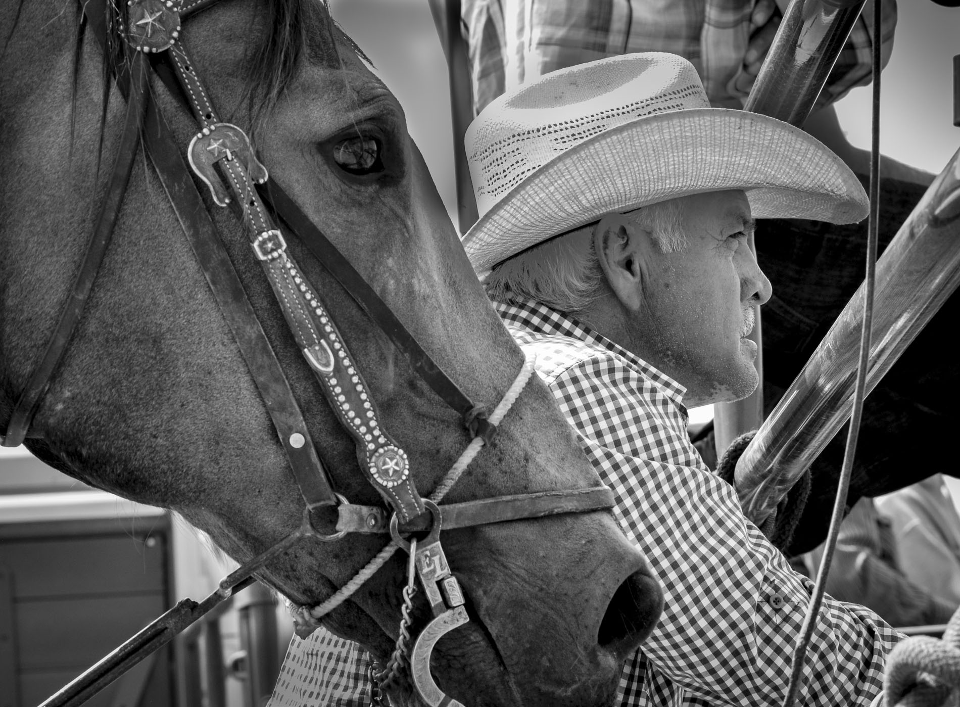 Cowboys - Horses and their partners