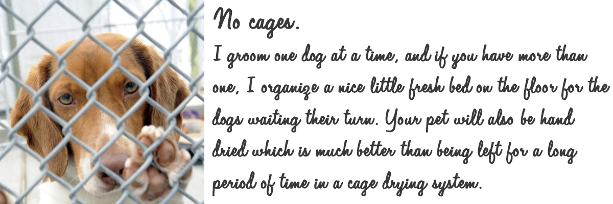 no cages.jpg