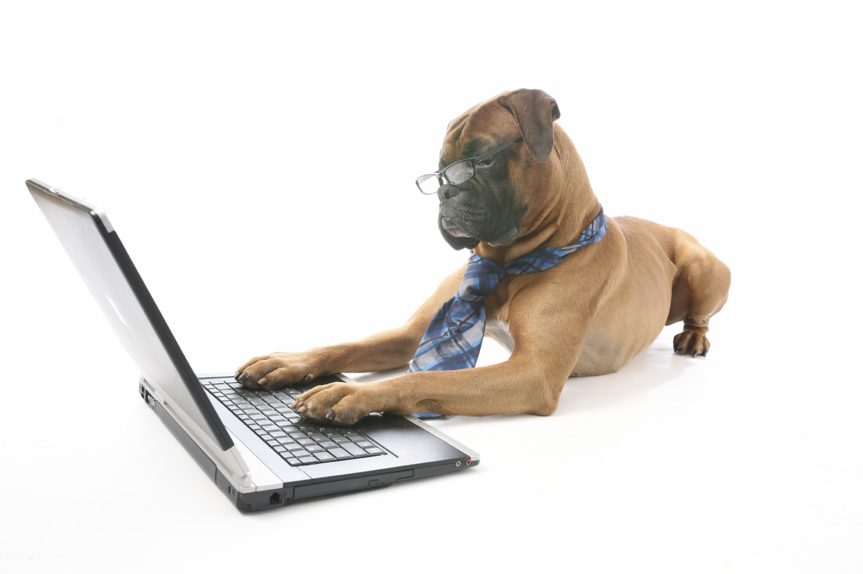 dog-writing.jpg