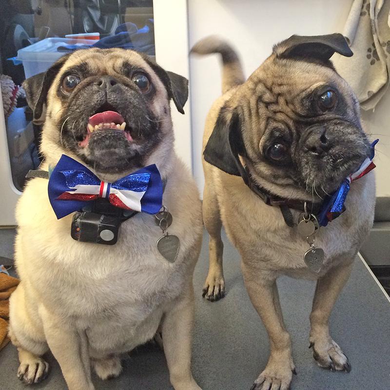 Dug & Wilbur 4th of july.jpg