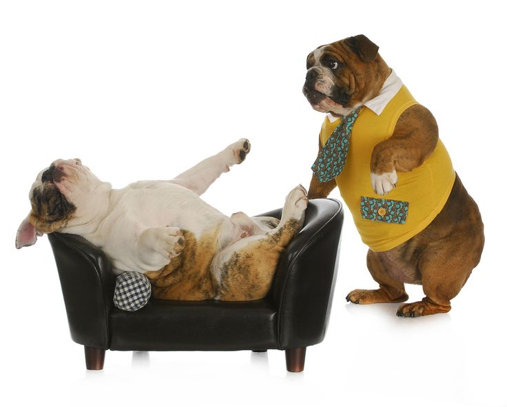 346a38640de74ef87acff9c7486b2a32--dog-psychology-sofas.jpg