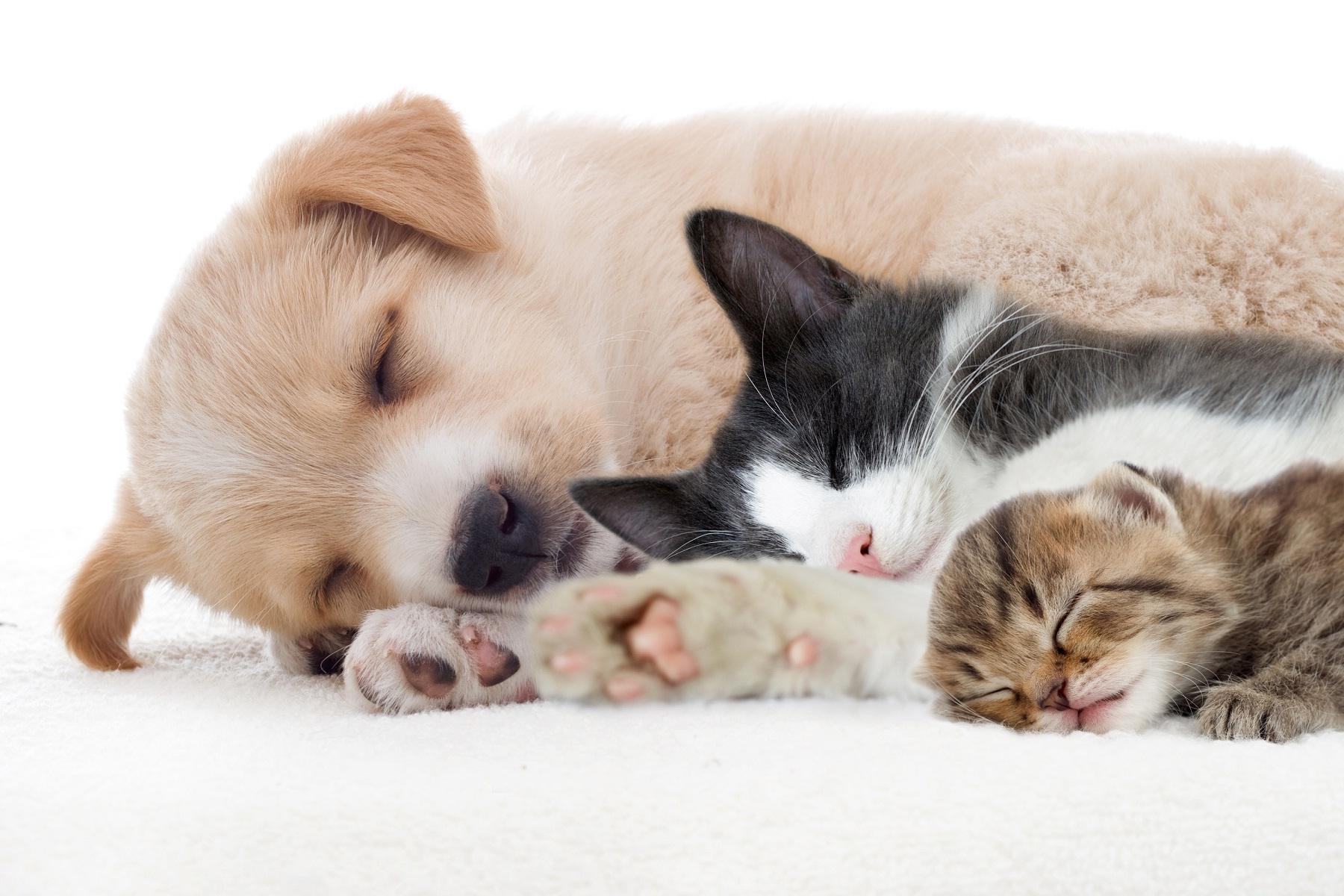 Dog-cat-friendship-sleep-together.jpg