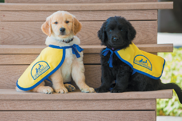 Service-dog-puppies.jpg