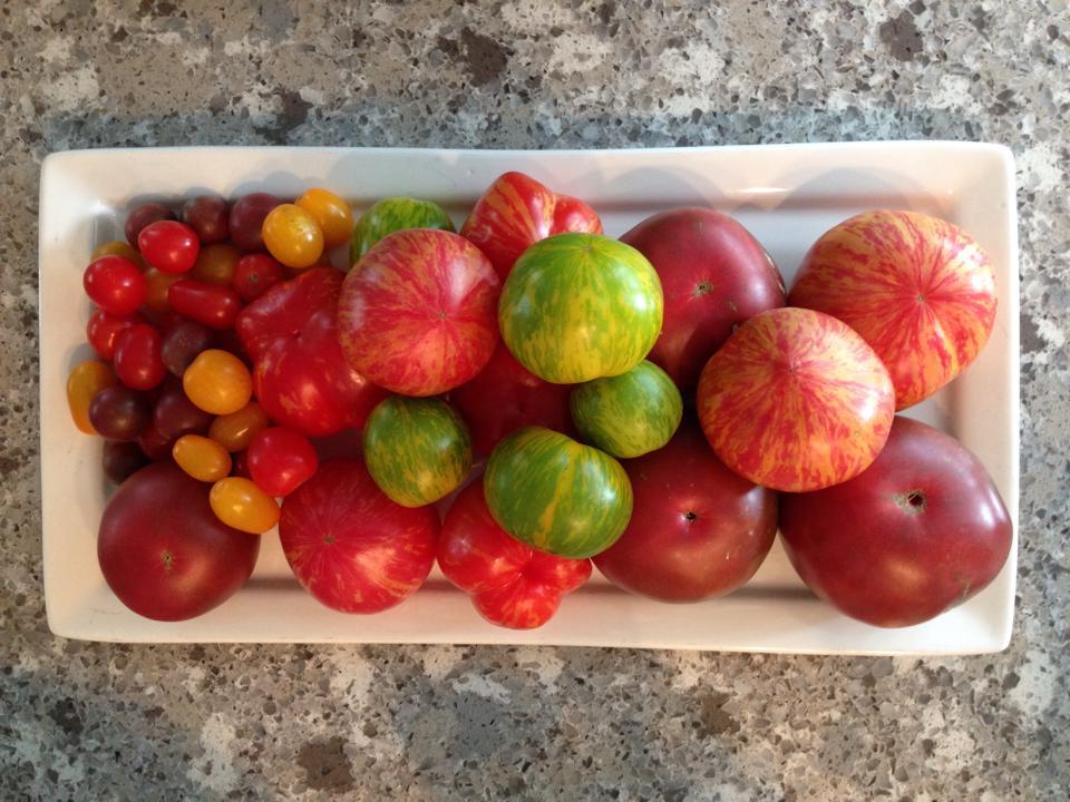 tomatoes.jpg 2.jpg
