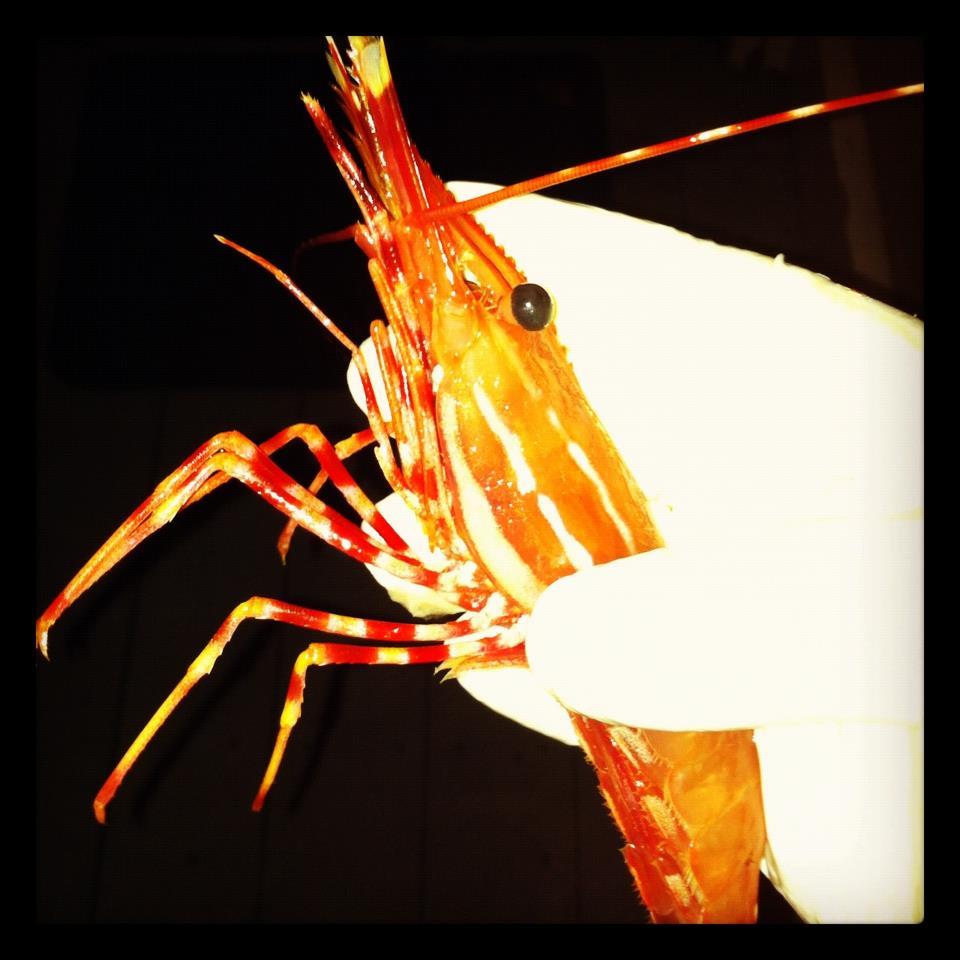 sb prawns.jpg