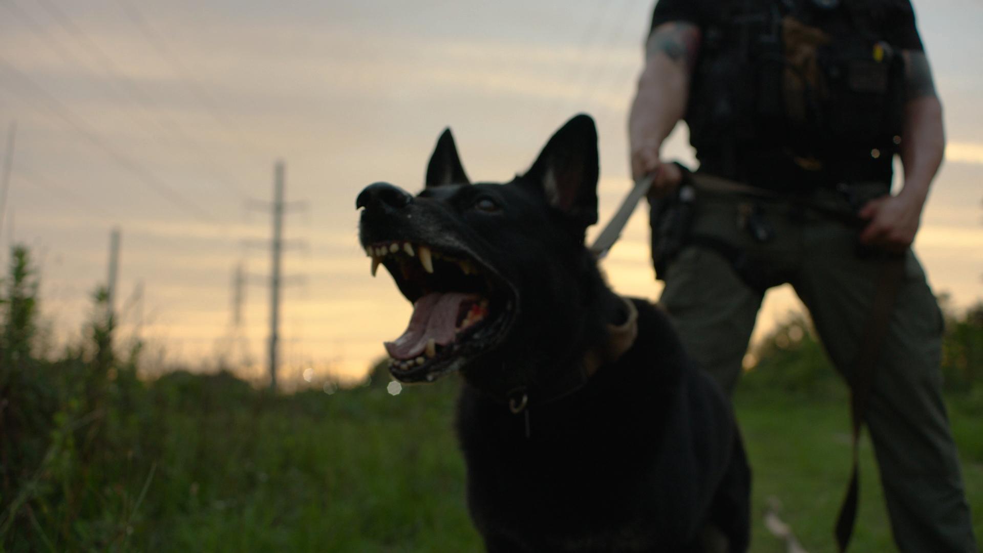 charleston dog mouth1.jpg
