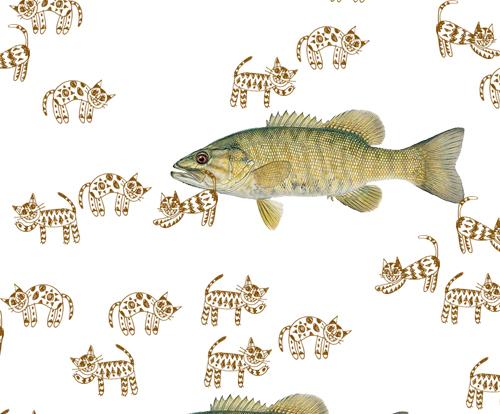 Cat Fish (close up)