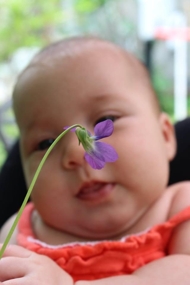 vee-violet1.jpg