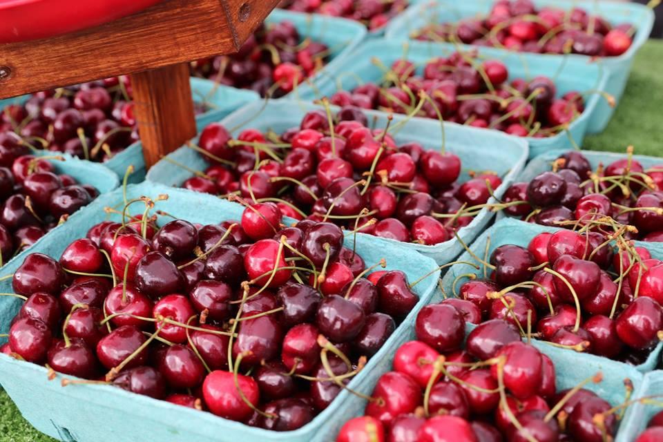 Cherries _S&D June.jpg