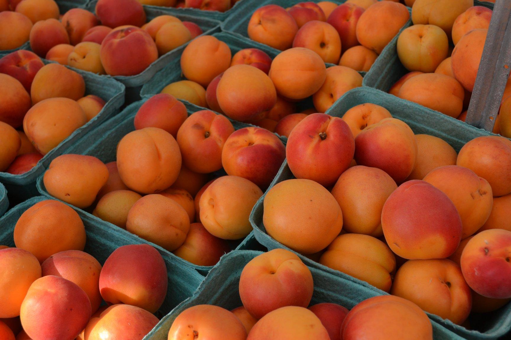 Apricots - July.jpg