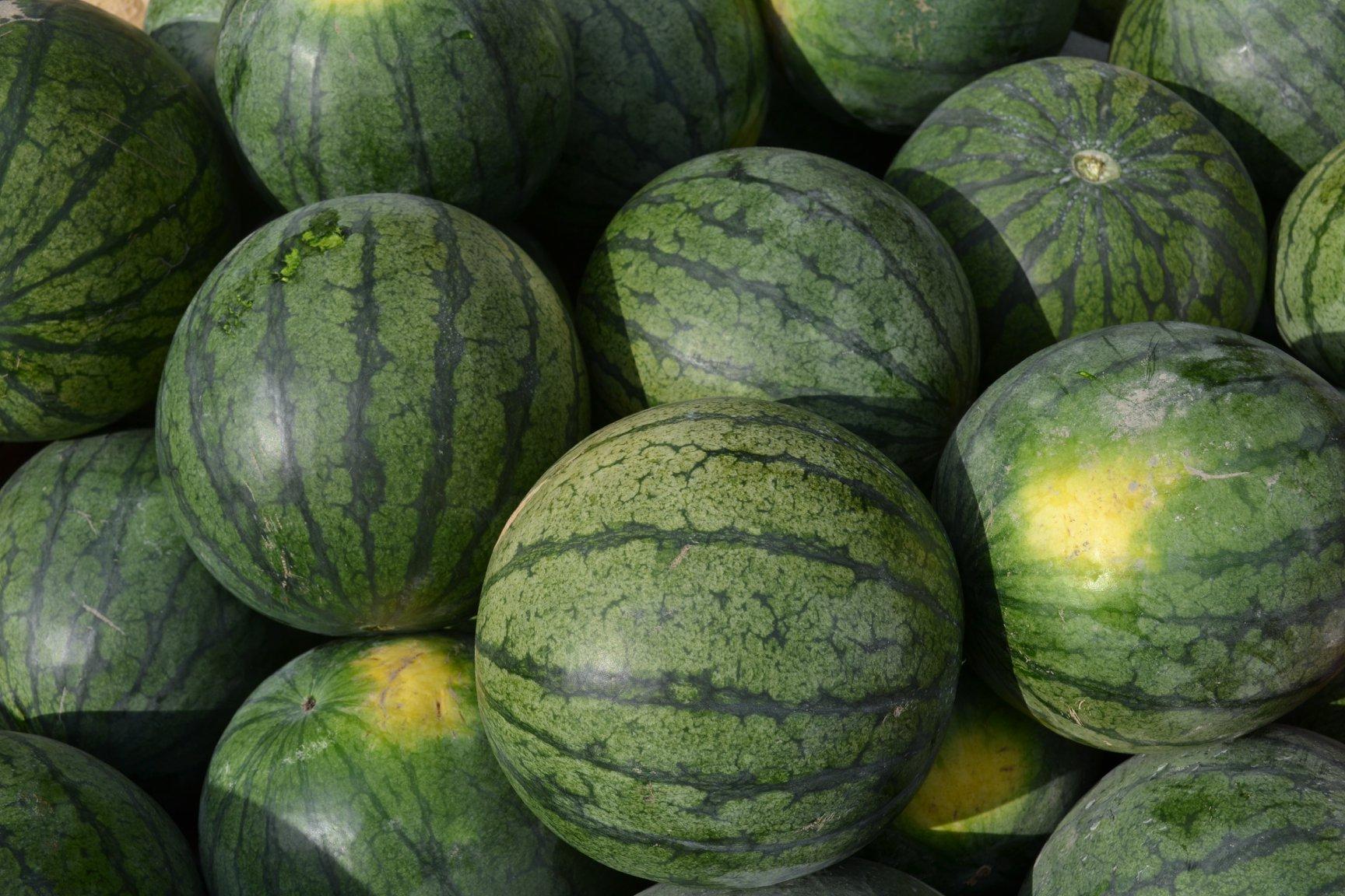 Watermelons aug.jpg