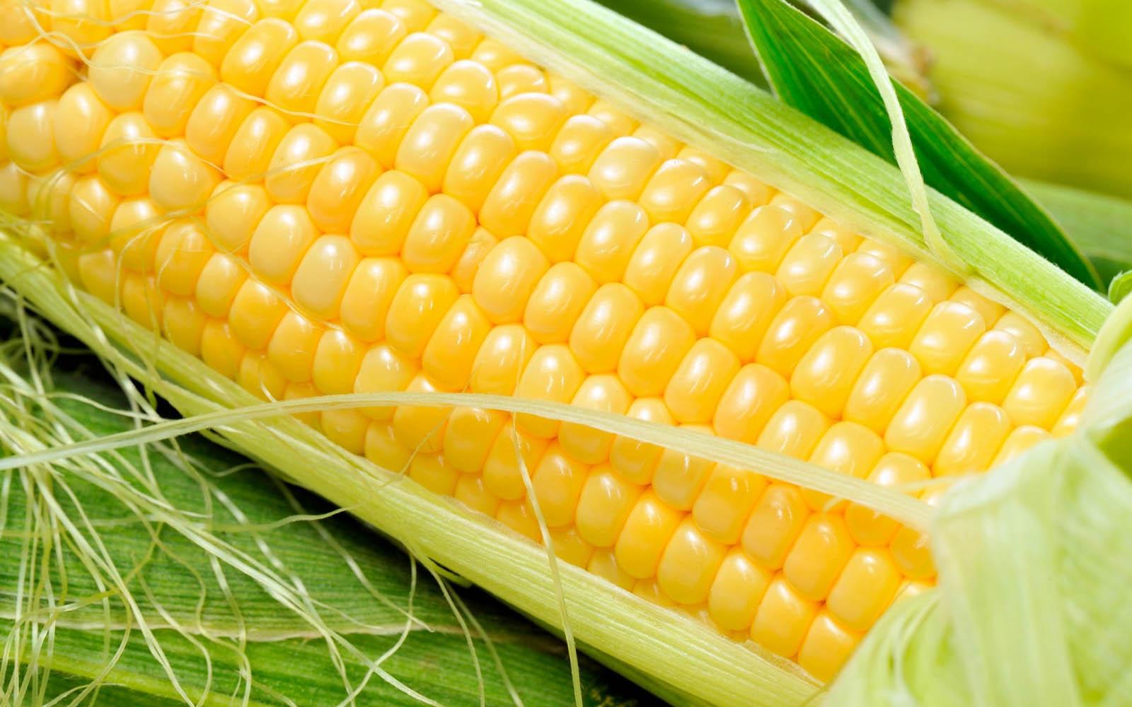 Fresh Corn Wallpapers 3.jpg