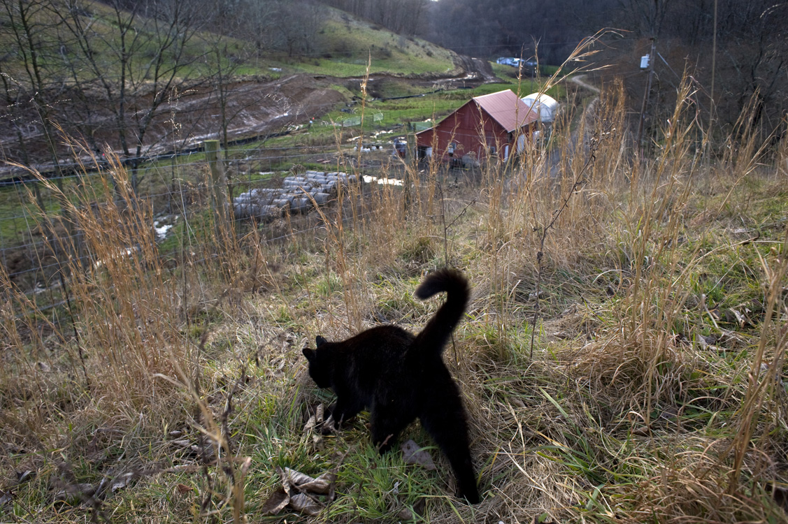 Jeanne Williams and her husband Llew purchased the 113-acre farm they named Red Barn Farm in 1995. Her father introduced her to farming in her teens when her family moved to Greene County. Auzre, one of Williams' barn cats, explores the land overlooking pipeline construction.©Martha Rial/MSDP 2012