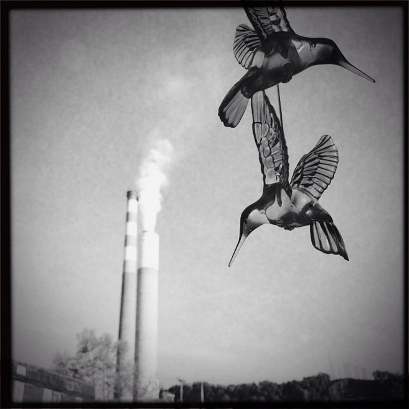 Glass hummingbirds dangle from a tree across from the power plant in Cheswick, PA. © Annie O'Neill/TDW 2015
