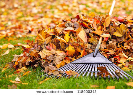 stock-photo-pile-of-fall-leaves-with-fan-rake-on-lawn-118900342.jpg