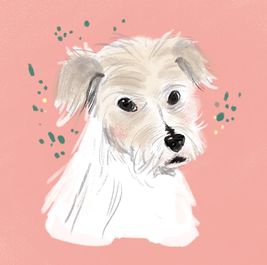 My Dog Winnie
