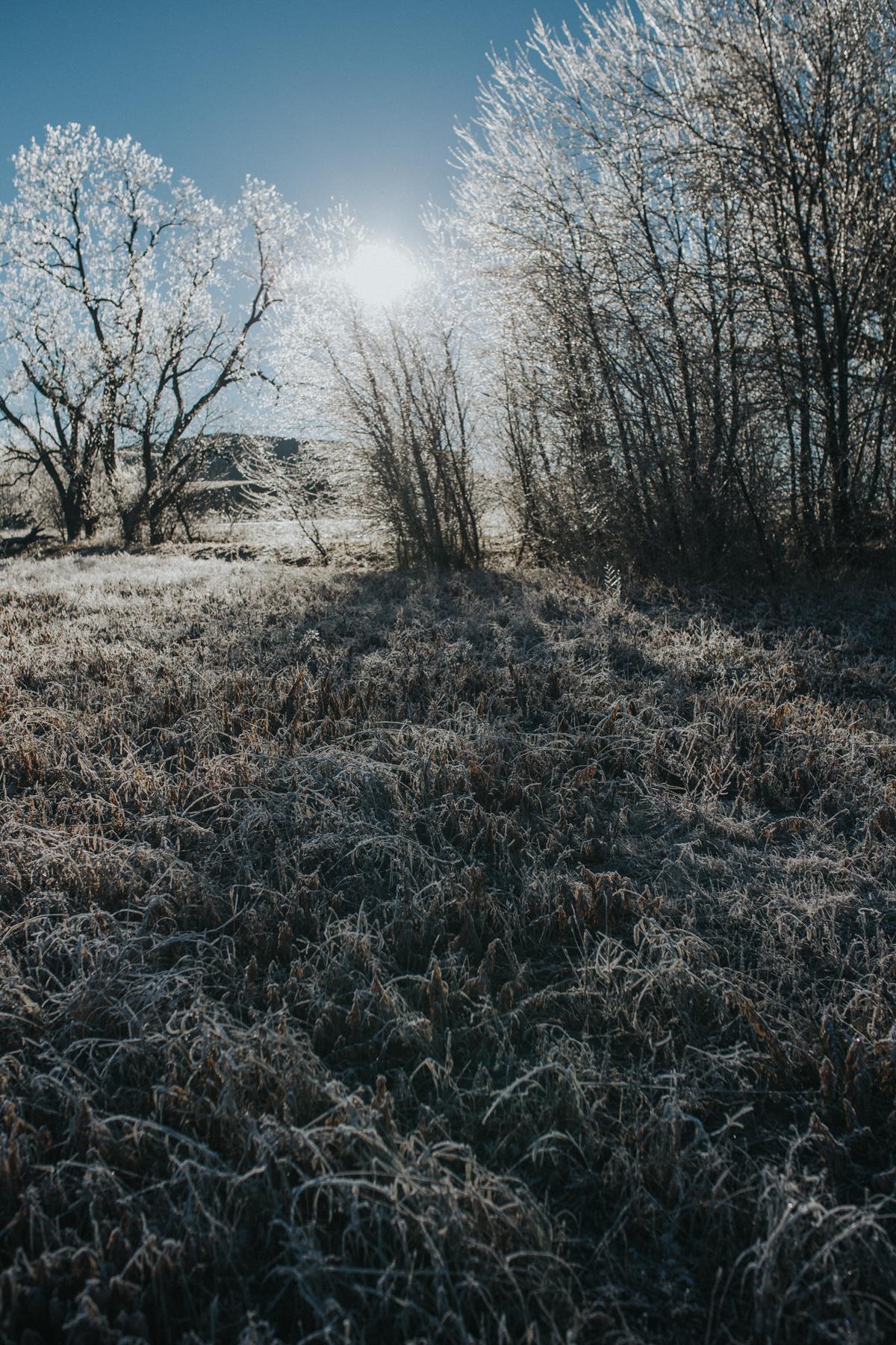 Ice Storm-0593.jpg