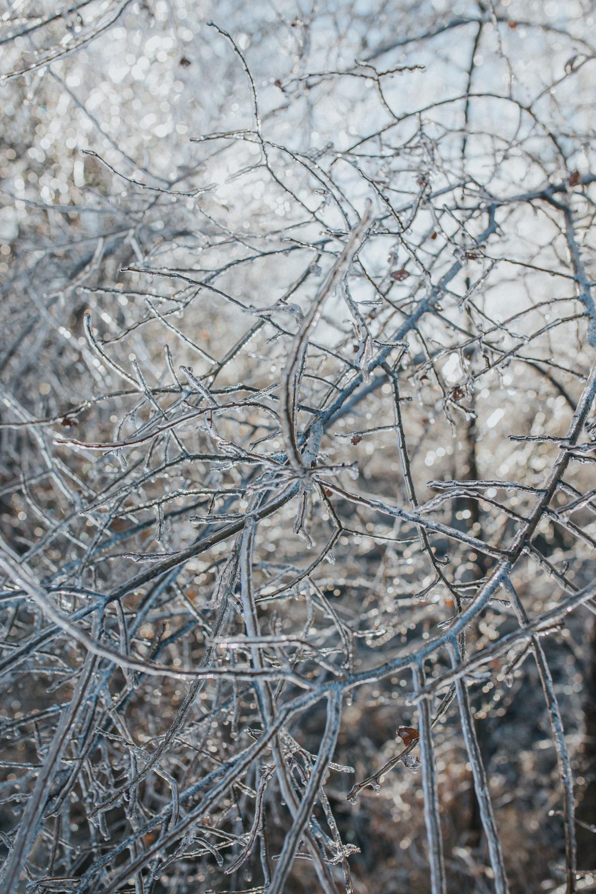 Ice Storm-0607.jpg