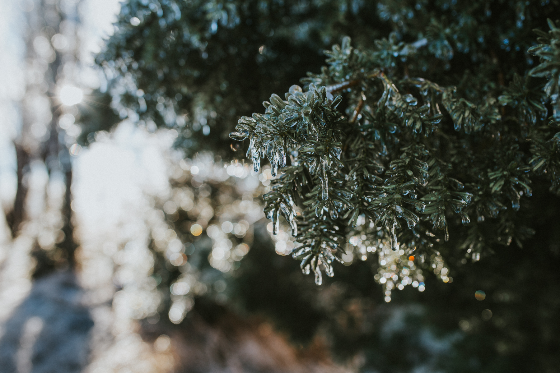 Ice Storm-0691.jpg
