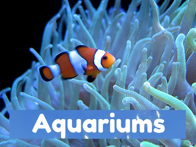 360video aquariums for 360vr vr