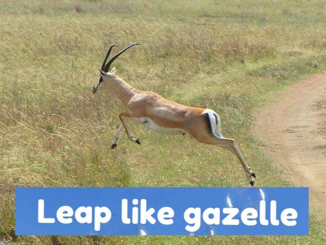 gazelle in virtual 360.jpg