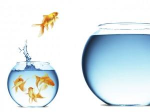 fish-bowl-jump-300x225.jpg