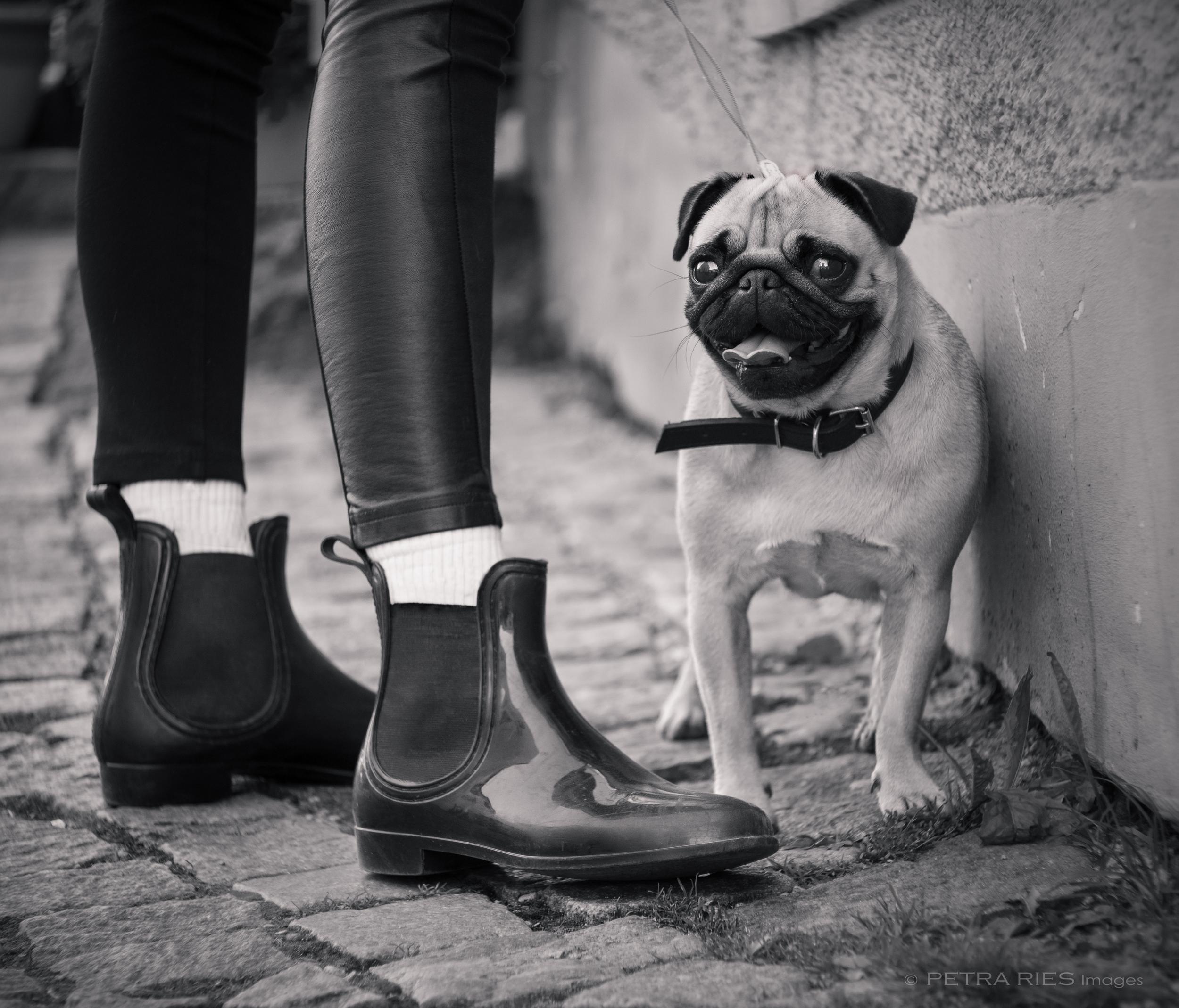 Fashion Pug_bw.JPG