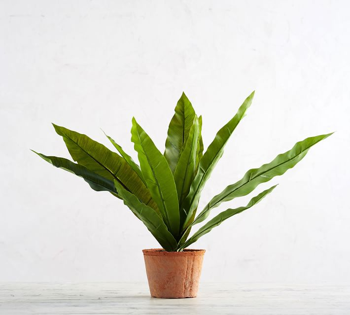 faux-potted-birds-nest-fern-o.jpg